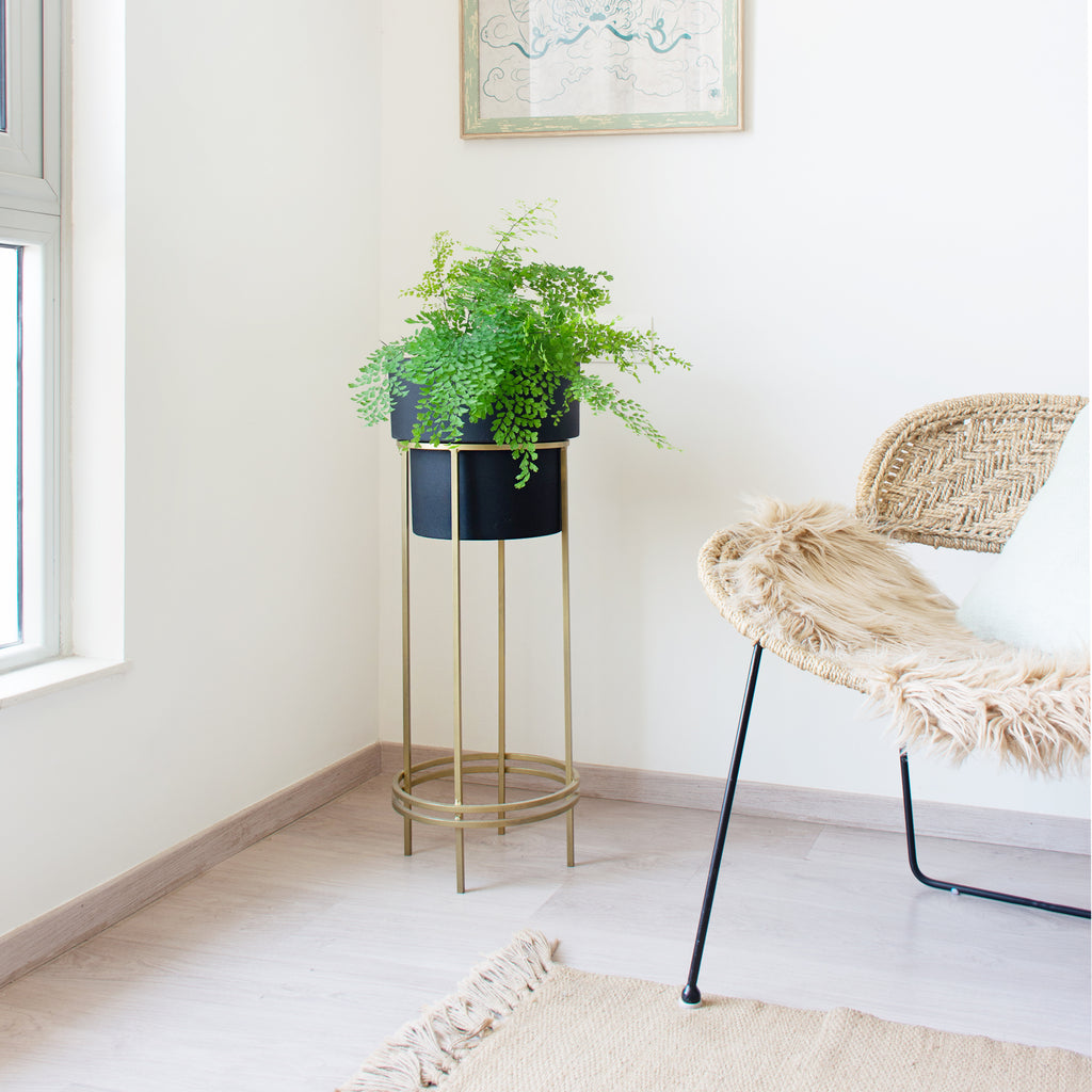 Noir black Planter with gold stand & Madenhair fern in it