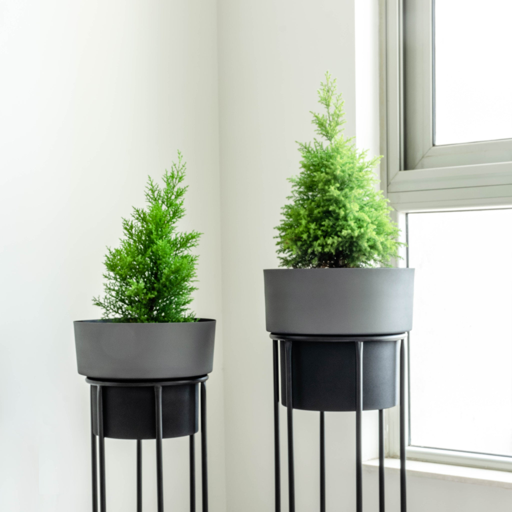 Two tall dual tone planters, slate and black with black stands in font of a window