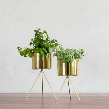 Two gold small table top planters with gold stands on a table