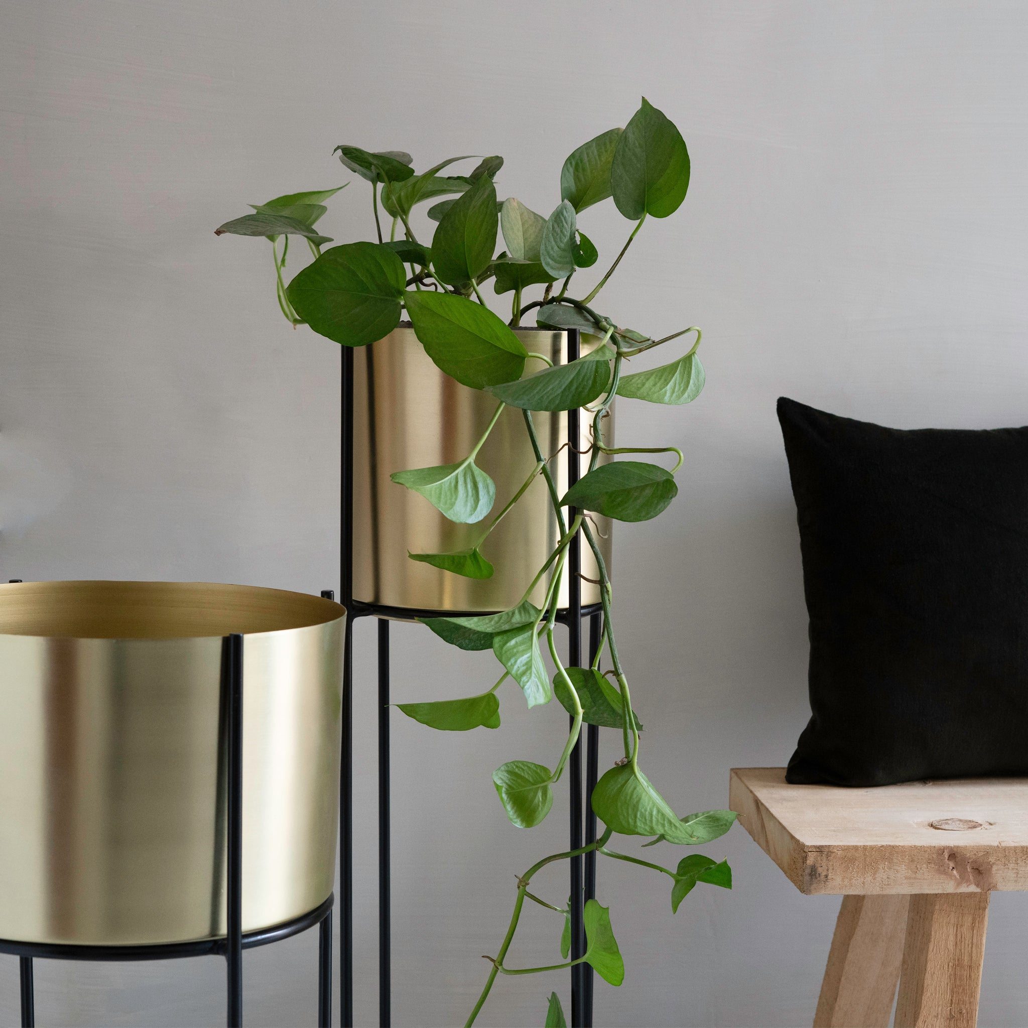 Marigold Planter, Tall, Matte gold