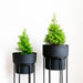 Two tall planters, black pots with black stands on a white background