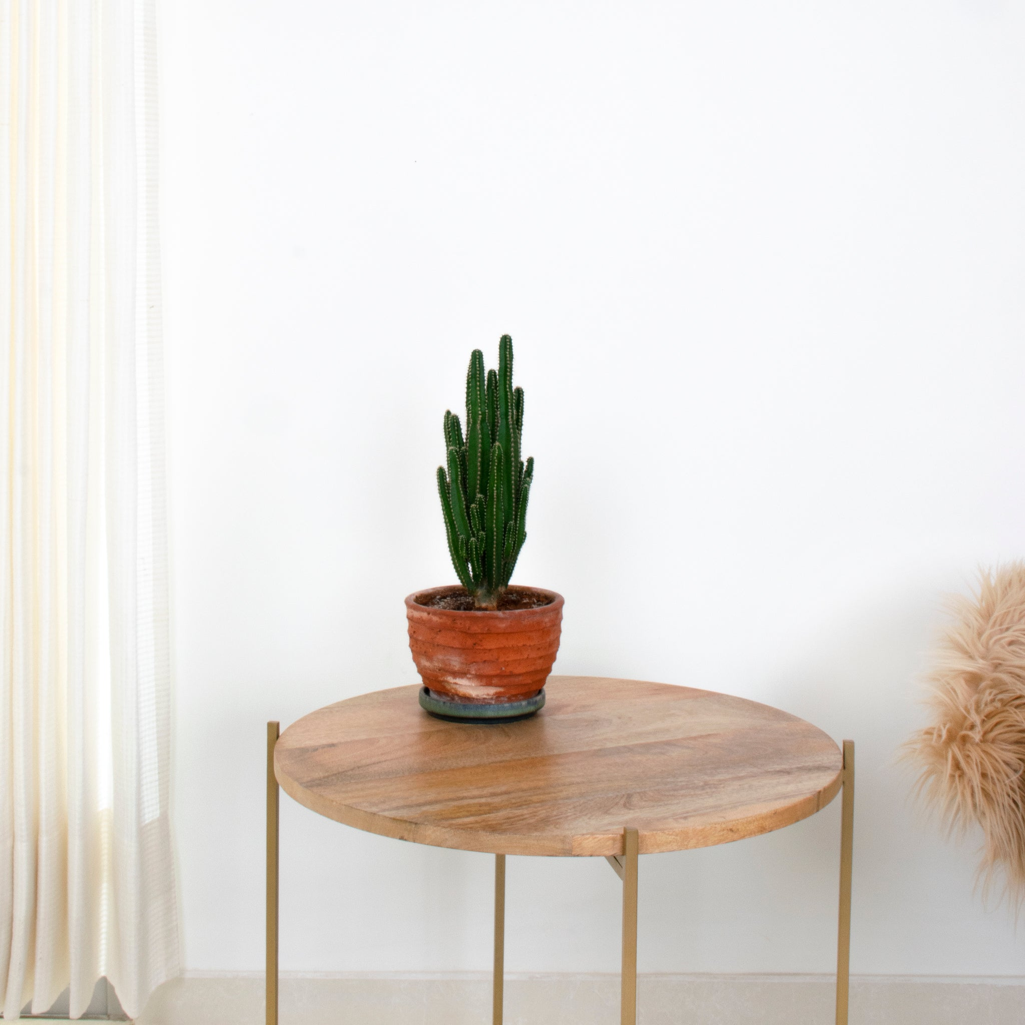 Copenhagen table with plant pot on top, made by Fleck India