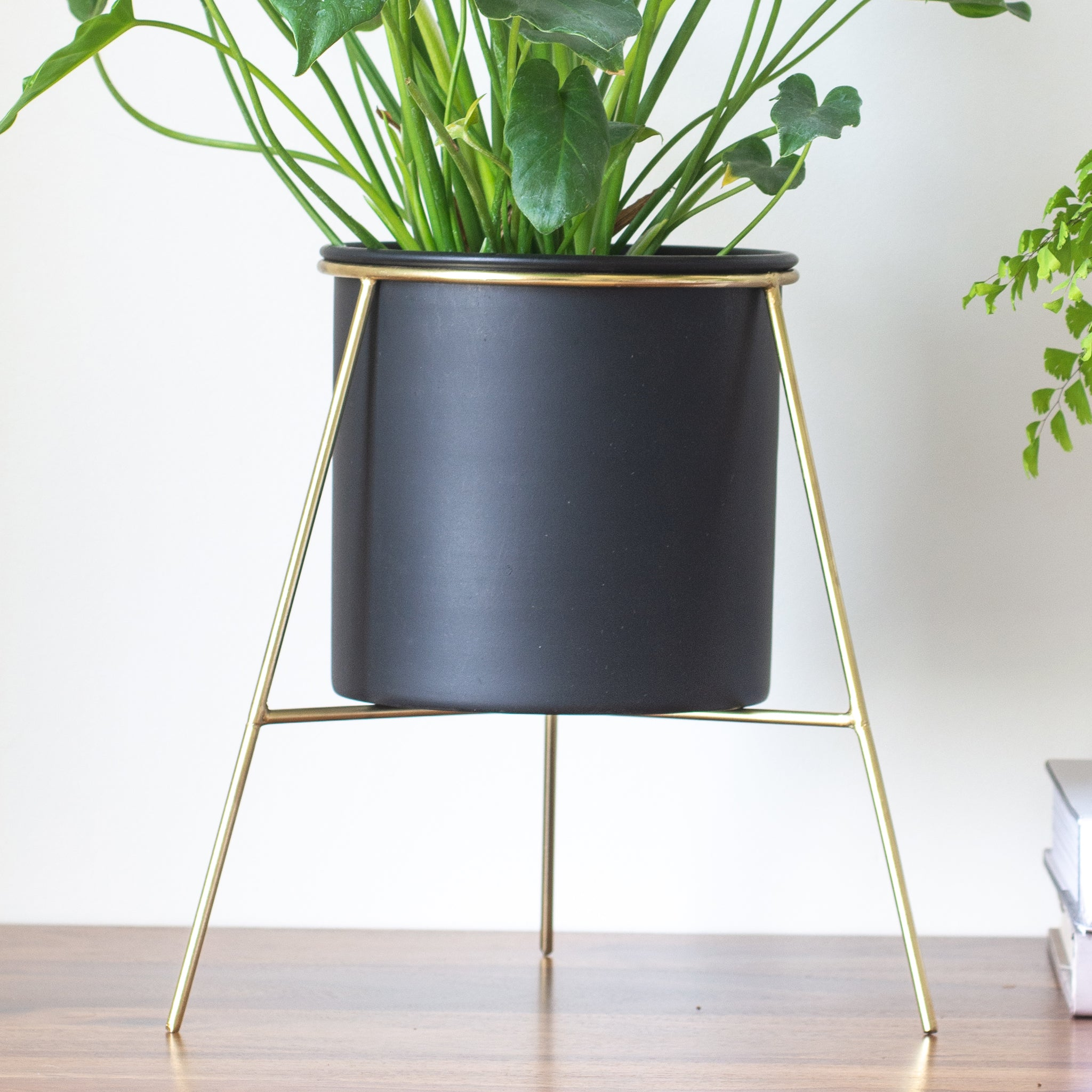 Noir black Planter with gold stand & Madenhair fern in it, place on a table top