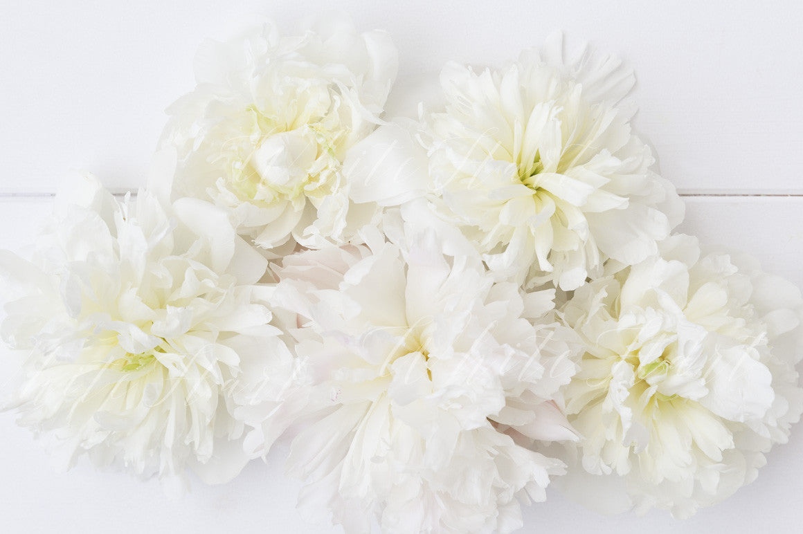 White peonies stock photo the pretty mock up shop white peonies stock photo mightylinksfo