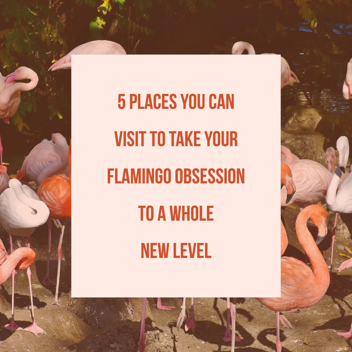 5 Sites To take your Flamingo obsession to a whole new level