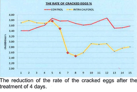 The reduction in cracked eggs after 4 days of using Intra Calferol