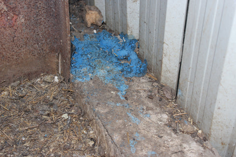 Racumin Foam in use | Rat Killer | Visible results that rats have been present