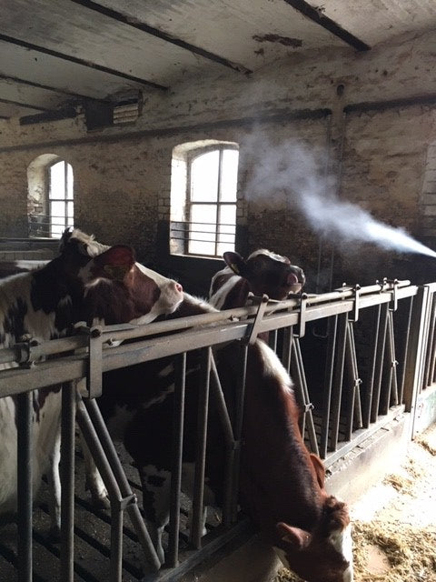 Intra Aerosol Spray Can | Cows with cough