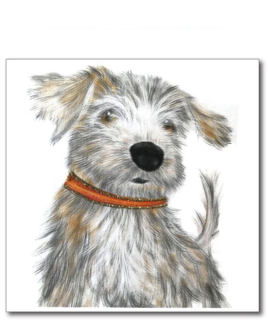 Norfolk Terrier - shopatstocks