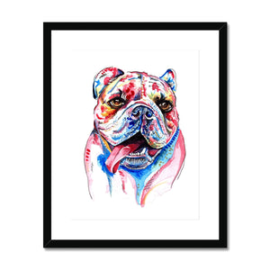 British Bulldog Framed & Mounted Print - 'Cheeky Boy'