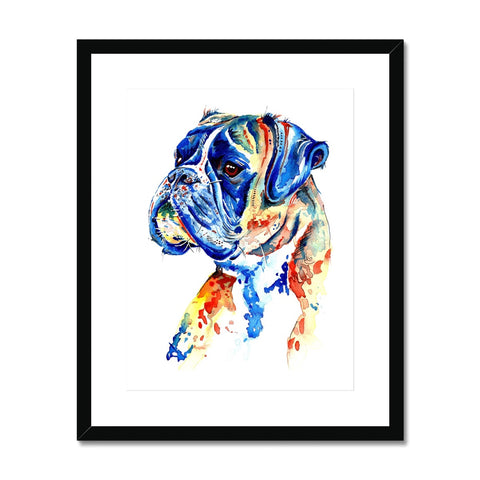 Boxer Dog Framed & Mounted Print - 'Handsome Boy'