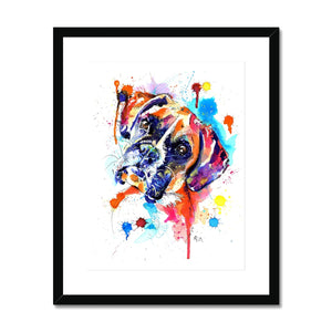 Boxer Dog Framed & Mounted Print - 'Luca'