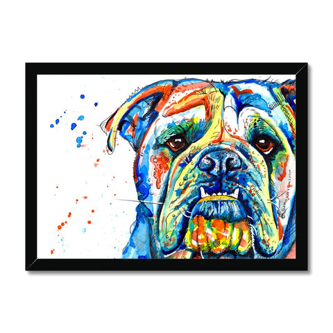 British Bulldog Framed Print - 'Handsome Lad'