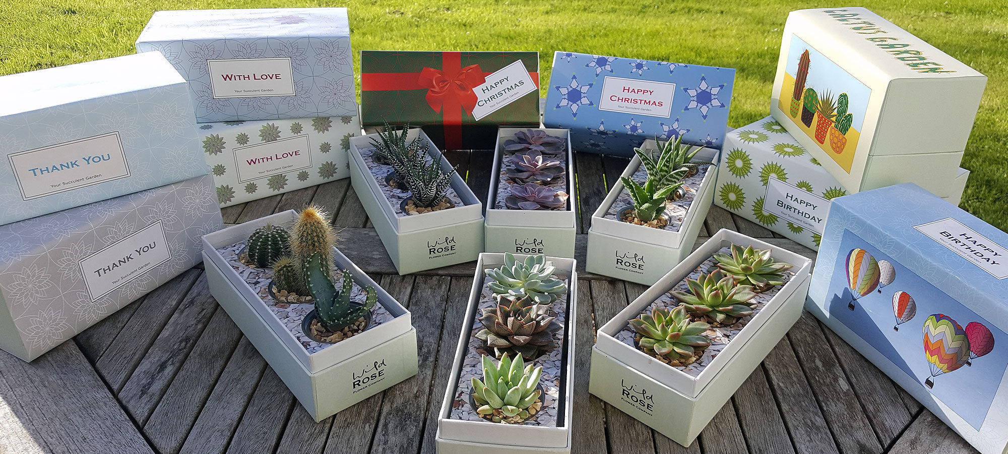 Succulents Gift Box Planters