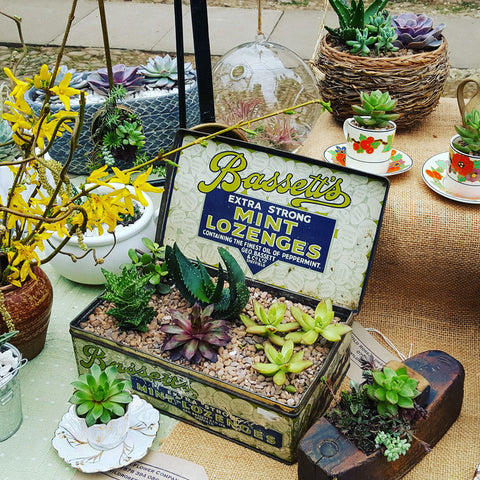 quirky succulents on the stall