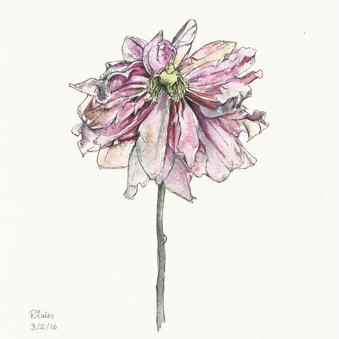 Fresh or Dried Flowers in Watercolour – with renowned local artist Ruth Eales