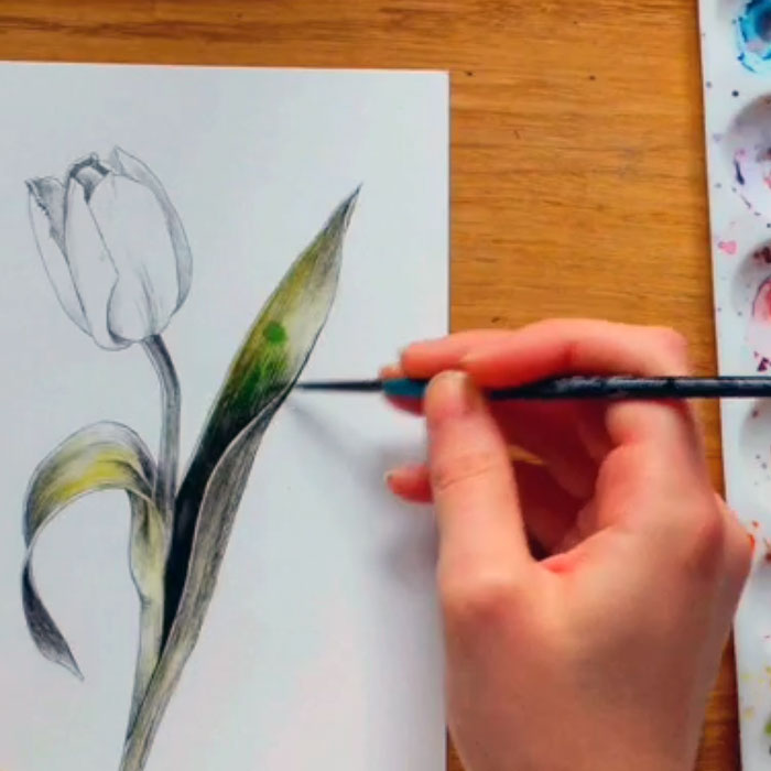Tulips in Watercolour – with local artist Ruth Eales
