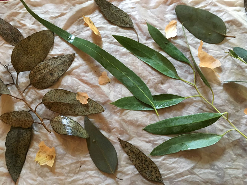 Eco printing - An Introduction to The Magic & the Alchemy with Fiona Balding
