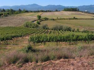 THE VINEYARD Image