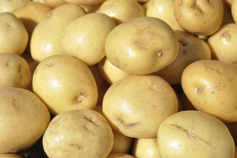 Yukon Gold Potatoes Large