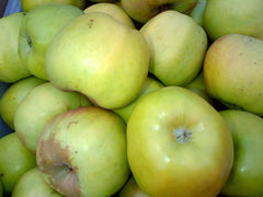 Newtown Pippin Apples - Hillcrest