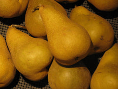 Bosc Pears from Hillcrest Orchard