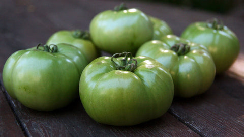 Green Tomatoes Large