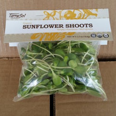 Micro Greens - Spicy Mix