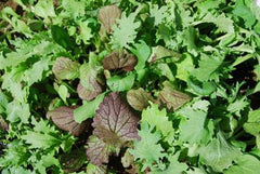 Mixed Mustard Greens