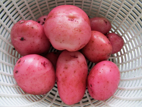 Bodega Red Potatoes Large