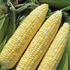Allure Sweet Corn