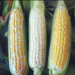 Mixed Sweet Corn