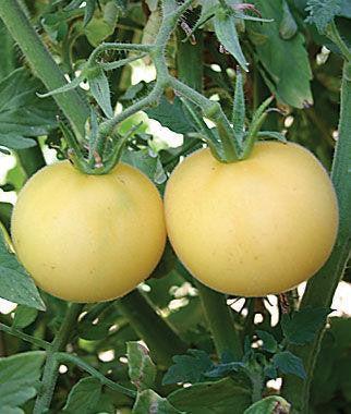 Garden Peach Tomatoes Large