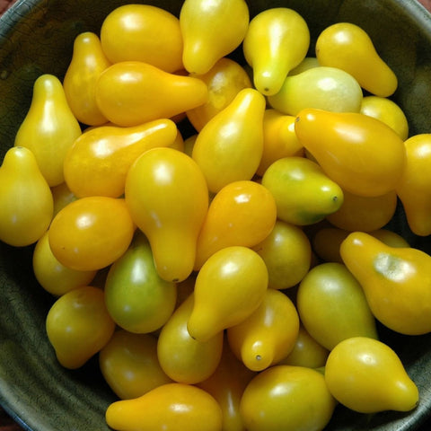 Yellow Pear Tomatoes Large