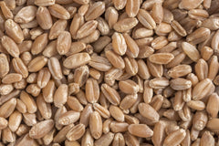 Durum Wheat Berries