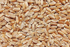 Hard Red Wheat Berries