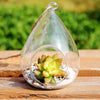 Round Terrarium Cute Glass Pots Air Plant Flower Pot 12*9 cm Vases
