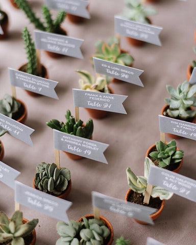 mini succulent wedding favors