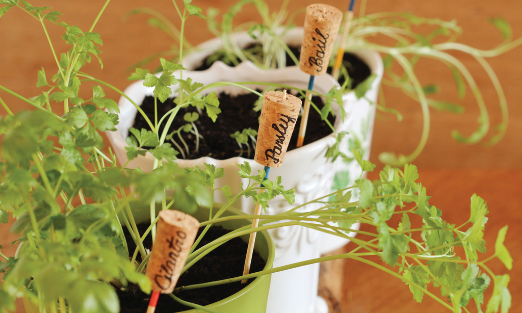How to: DIY Herb Garden