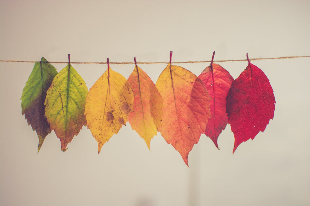 Leaf Decor for Favorite Fall Things Southern Breeze Blog