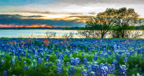 Texas Bluebonnets Lake at Sunset