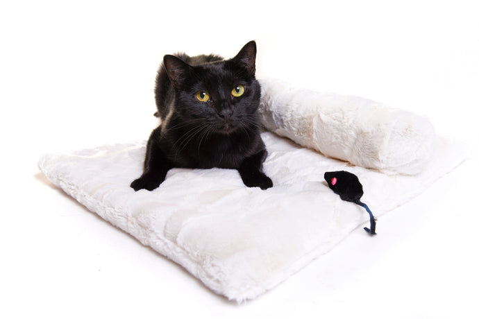 Catnip Comforter and Belly Roll - Cream - Funraise