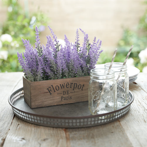 Lavender Flower Plant 2 Pc Set