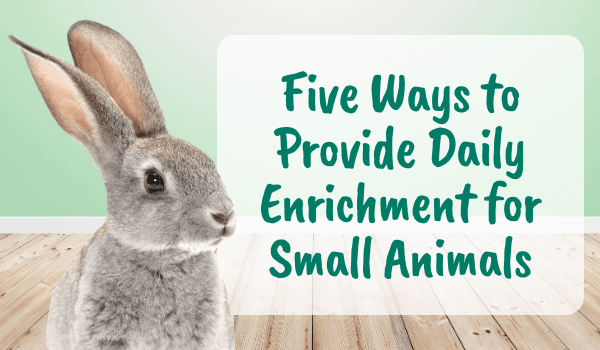Five Ways to Provide Daily Enrichment for Small Animals- Oxbow Animal Health