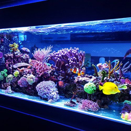 How to Adjust the pH Level of Your Aquarium