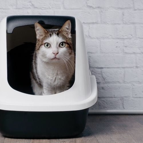 How to Train a Cat to Use a Litter Box in a New Location