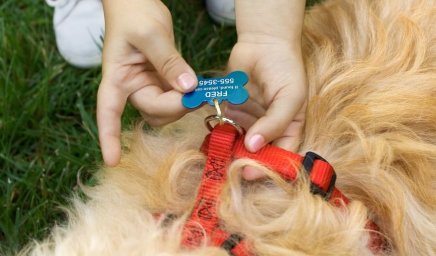 Why Every Dog Should Be Tagged