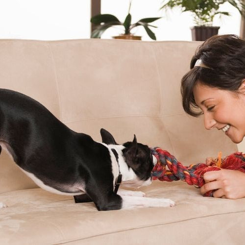 Entertaining Pets While Social Distancing