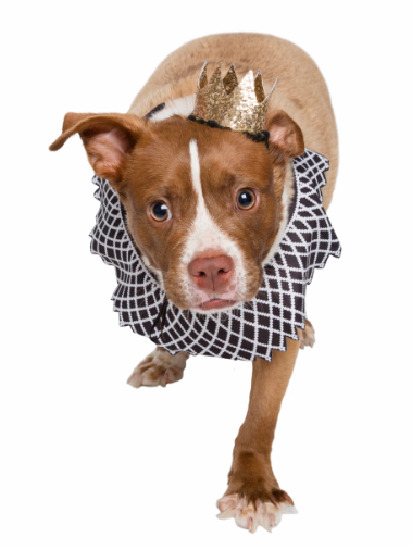 Pet Krewe Notorious D.O.G Dog Costume