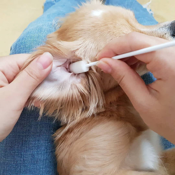 Canine Ear Cleaning System, Serum & 15 Tips